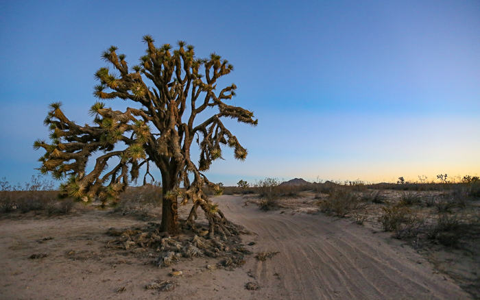 Mojave Desert, Lake Los Angeles