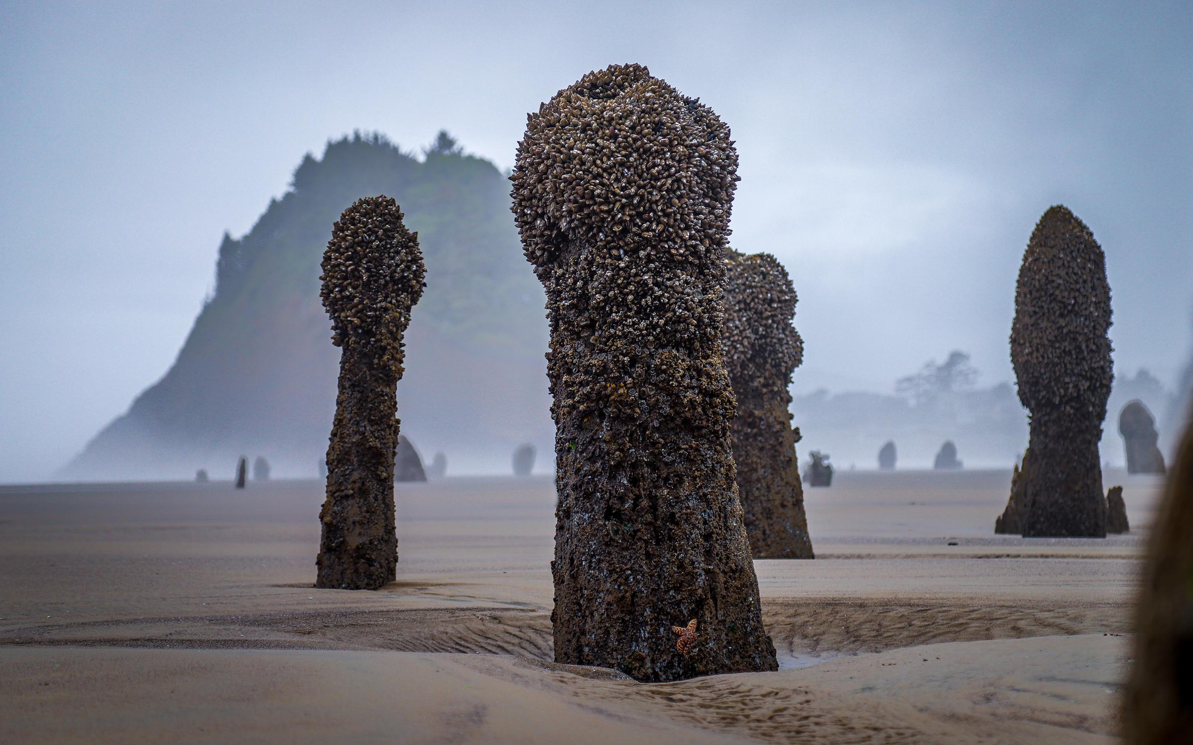 Neskowin Ghost Forest; Oregon Coast.